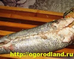Вкусные блюда из рыбы. Рецепты приготовления толстолобика 13