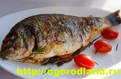Вкусные блюда из рыбы. Рецепты приготовления толстолобика 14