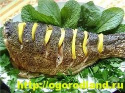 Вкусные блюда из рыбы. Рецепты приготовления толстолобика 8