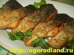 Вкусные блюда из рыбы. Рецепты приготовления толстолобика