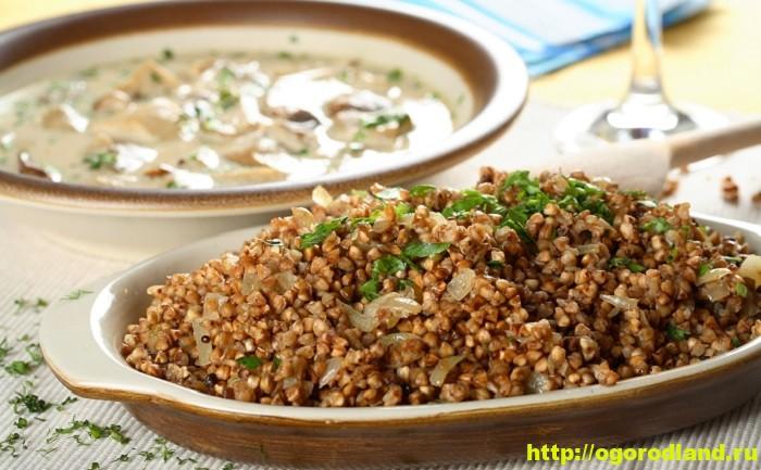 Блюда из гречки. Гречневые каши запеканки, котлеты. Рецепты