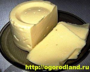 Как приготовить домашний сыр. 12 рецептов сыров по-домашнему 3