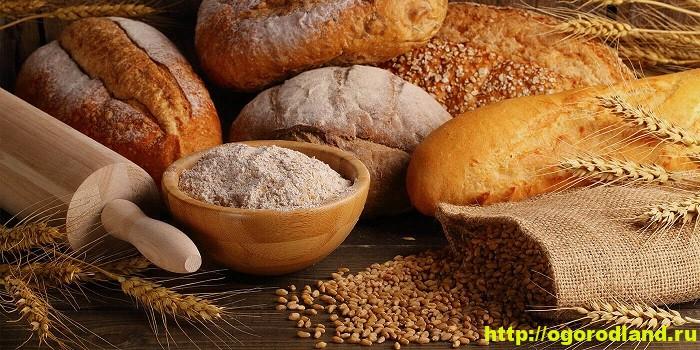 История хлеба. Как и где испекли первый хлеб?
