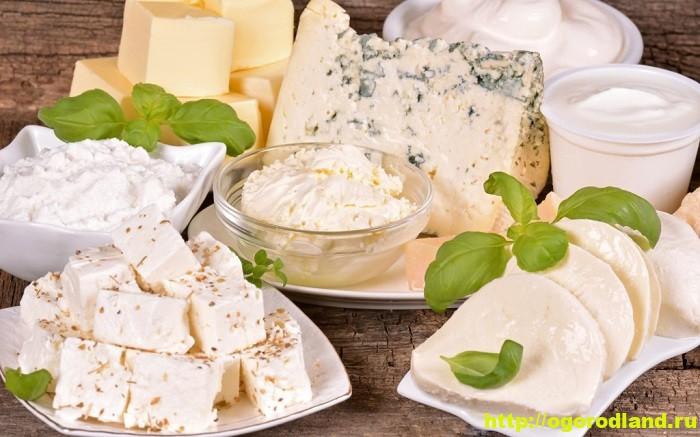 Как приготовить домашний сыр. 12 рецептов сыров по-домашнему 1
