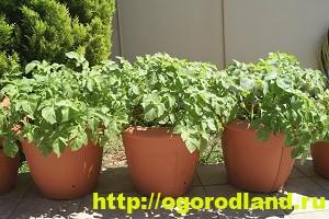 Как вырастить овощи у себя на подоконнике