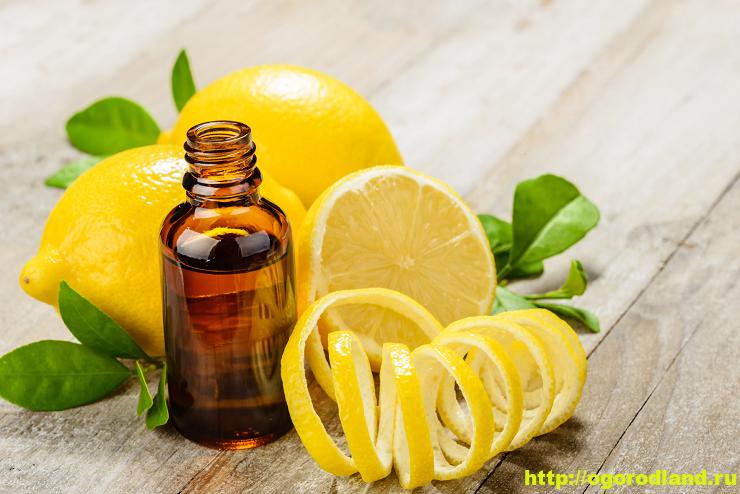 Масло лимона. Полезные свойства и применение
