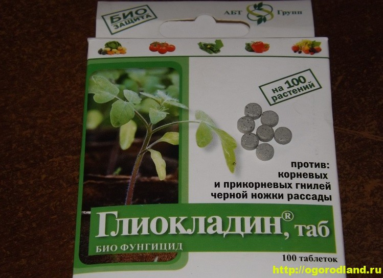 Биопрепараты от грибных заболеваний. Глиокладин для рассады 1