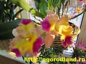 Орхидеи – выращивание, уход, полезные свойства. Виды орхидей