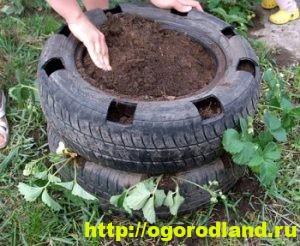 Способы выращивания клубники на различных участках 6