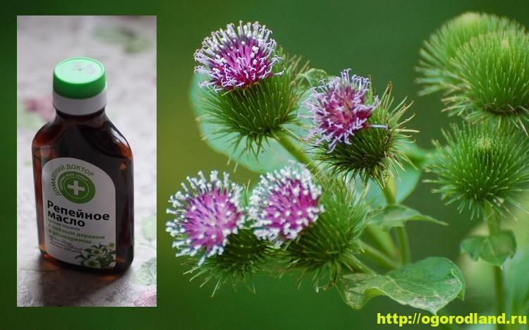 Репейное масло или масло лопуха. Применение репейного масла