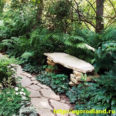 Лесной сад. Оформление участка в лесном стиле 14