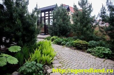 Лесной сад. Оформление участка в лесном стиле 5