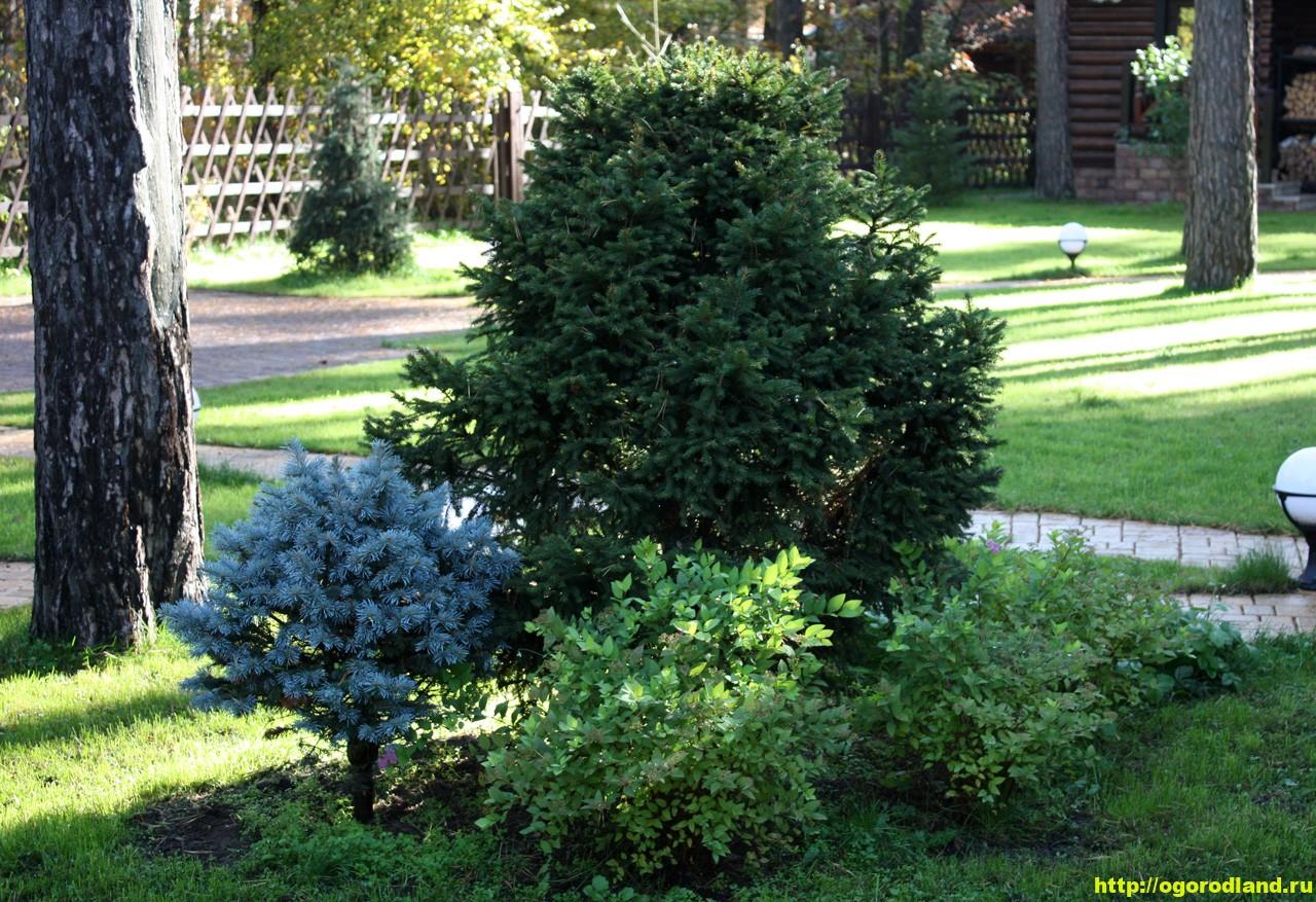 Лесной сад. Оформление участка в лесном стиле 1
