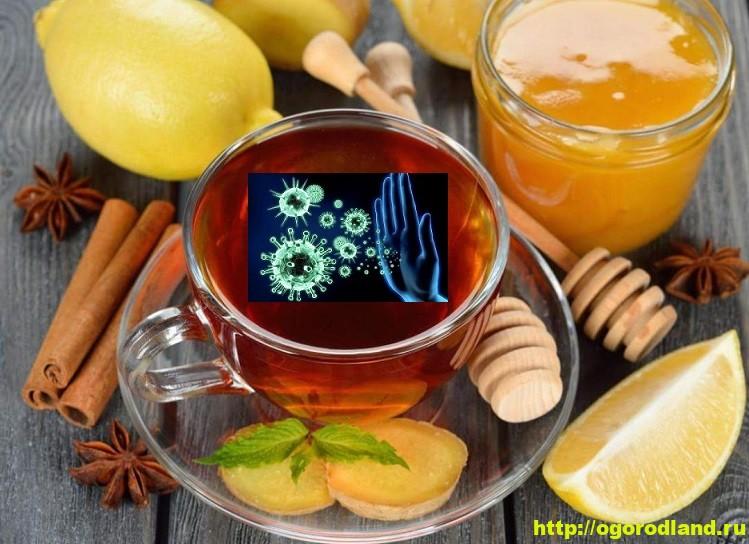Напитки для поднятия и укрепления иммунитета