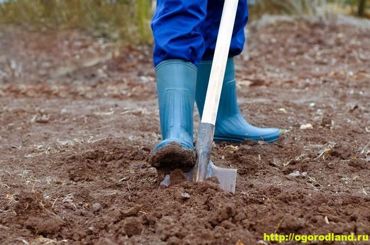 Осенние удобрения. Как правильно вносить удобрения осенью