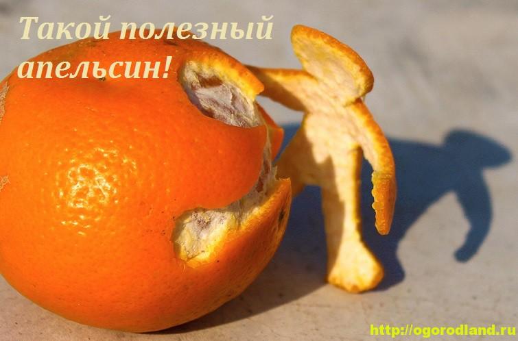 Апельсин в народной медицине. Польза и применение апельсина