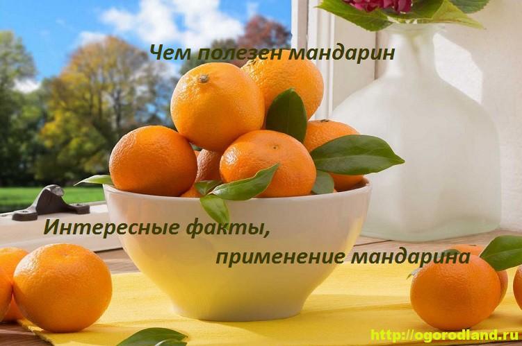 Чем полезен мандарин. Интересные факты, применение мандарина