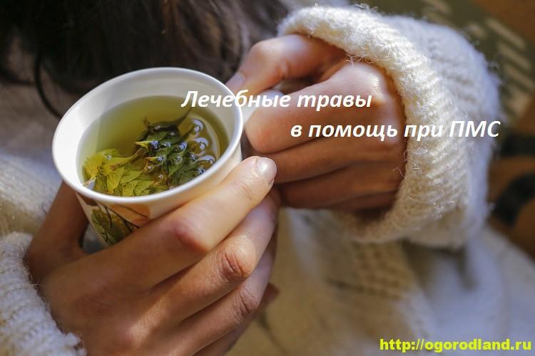 Лечение ПМС с помощью трав. Травы для снижения синдрома