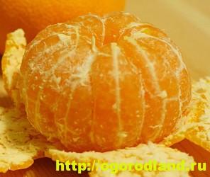 Салаты с мандаринами. Подборка рецептов вкусных салатов 6