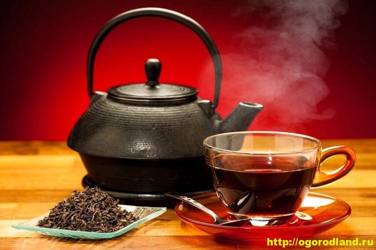 Как правильно заваривать чай? Сорта чая. Польза и вред чая 10