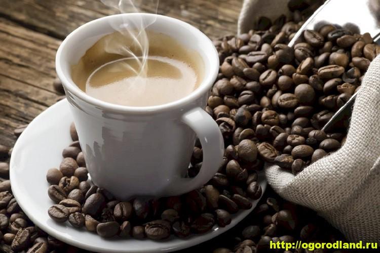 Как сварить кофе правильно. Рецепты вкусного кофе 1