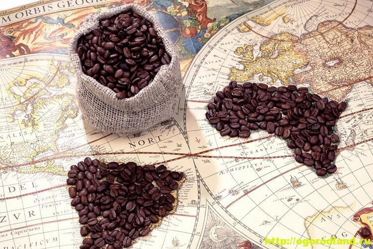 Кофе. Легенда о кофе и история кофе в разных странах 7