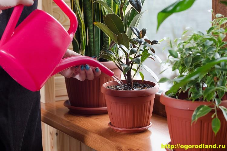 Правильный уход за комнатными растениями в весенний период 1