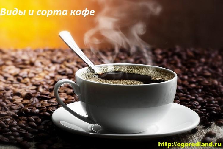 Виды и сорта кофе. Описание видов и вкусовые качества сортов 4