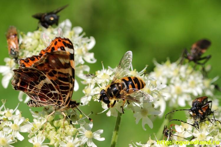 Как привлечь насекомых-опылителей на свой участок