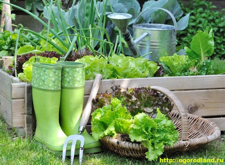 Маленькие хитрости умного огородника-садовода