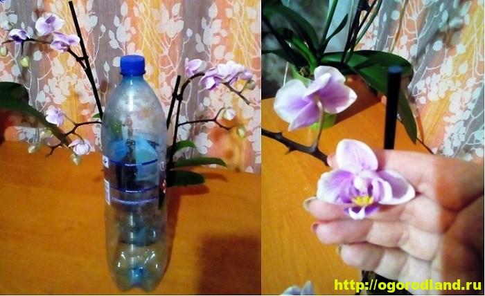 Орхидеи в доме. Сорта и виды. Все важное в уходе за орхидеей 10