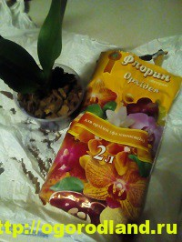 Как спасти орхидею? Лечение болезней орхидеи. Проблемы ухода 4