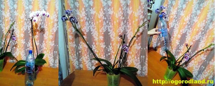 Орхидеи в доме. Сорта и виды. Все важное в уходе за орхидеей 6