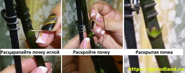 Стимуляция цветения орхидеи. Как заставить цвести красотку? 5