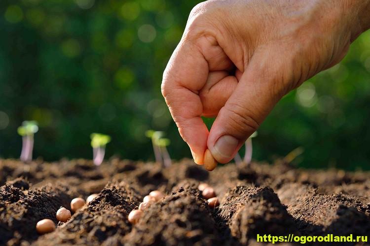 Что посеять семенами в июле