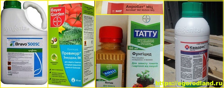 Фунгициды. 5 лучших препаратов для защиты растений 1