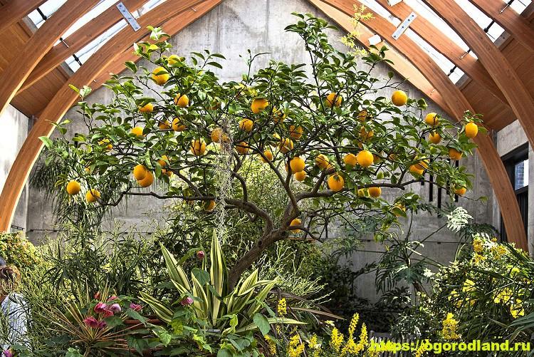 Домашняя оранжерея. Советы по уходу
