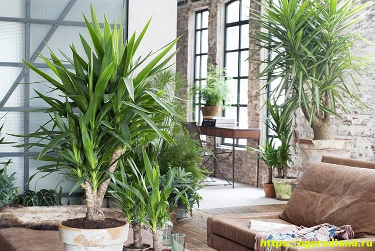 Растения-очистители воздуха в доме