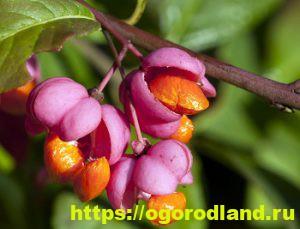 Ядовитые растения в саду. Топ 10 опасных для здоровья 10
