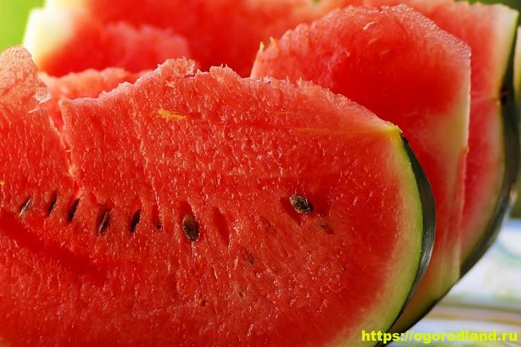 Чем опасен арбуз? Причины арбузного отравления 1