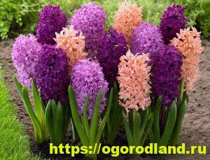 Ядовитые растения в саду. Топ 10 опасных для здоровья 6