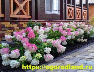 Ядовитые растения в саду. Топ 10 опасных для здоровья 7