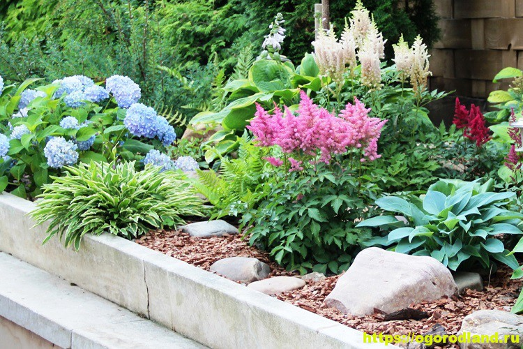 Красивые тенелюбивые растения для сада или балкона