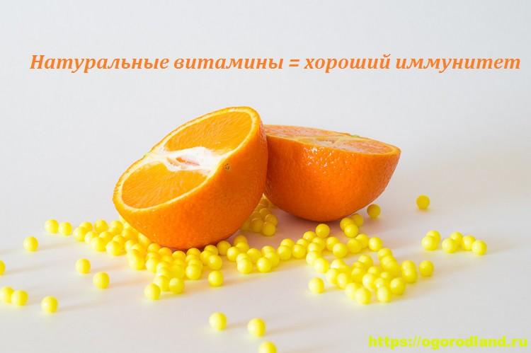 4 натуральных продукта, которые заменят аптечные витамины