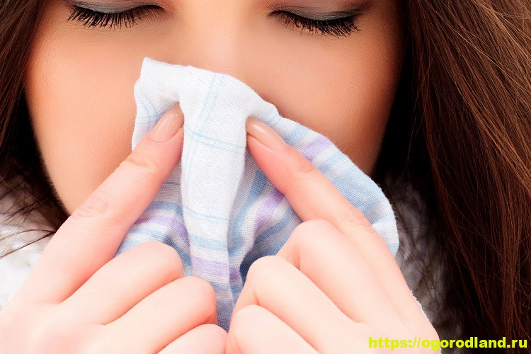 Нос не дышит. Что делать? Как быстро очистить заложенный нос