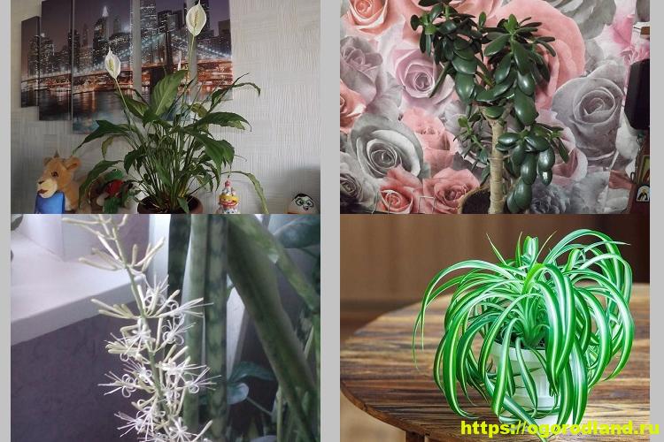 Неприхотливые цветы для дома