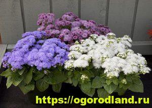 Какие цветы посадить на рассаду в апреле 3