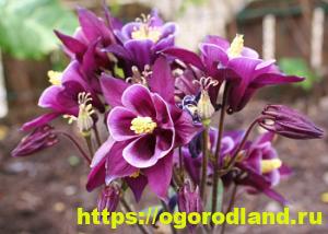 Какие цветы посадить на рассаду в апреле 7