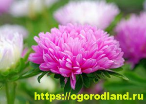 Какие цветы посадить на рассаду в апреле 2
