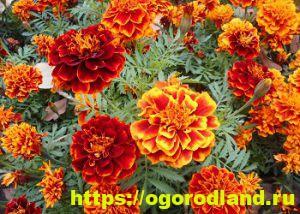 Какие цветы посадить на рассаду в апреле 4
